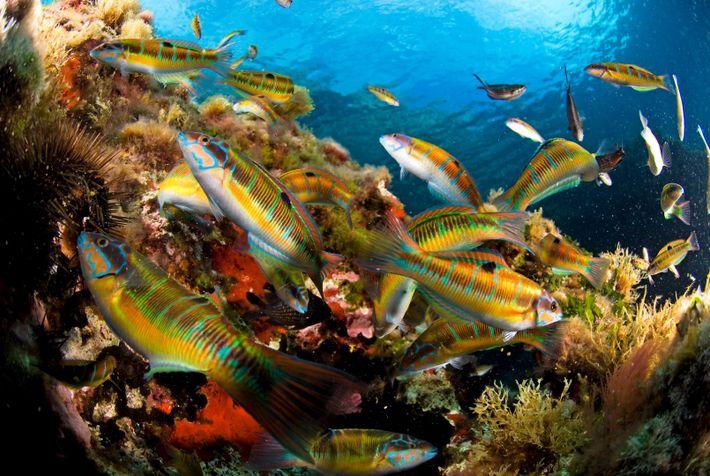 O projeto NEMA pretende compreender melhor a distribuiçãode espécies pouco conhecidas na costa algarvia através do ...