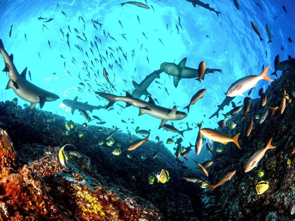 Tubarões no Séc. XXI: de Bestas a Bestiais