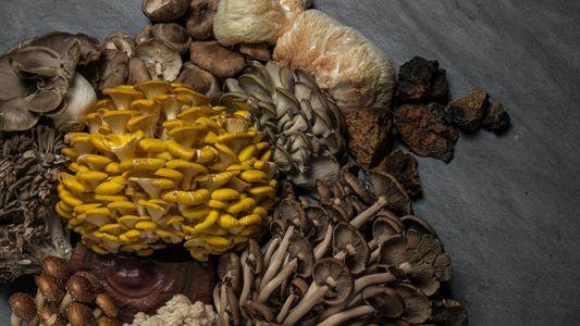 Os fungos são essenciais para a nossa sobrevivência. Estamos a fazer o suficiente para os proteger?