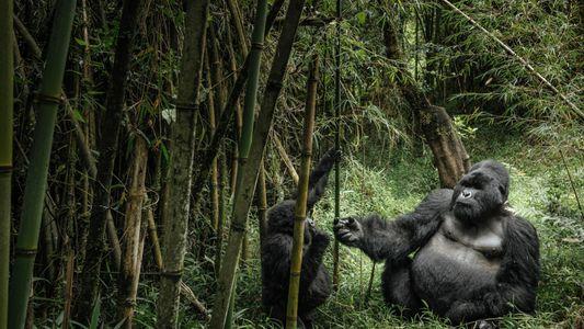Estes pais pouco valorizados no reino animal fazem grandes sacrifícios pelas suas crias