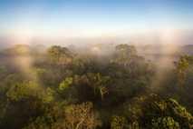 Graças à interferência humana, a floresta amazónica parece estar a libertar mais gases do que armazena, ...