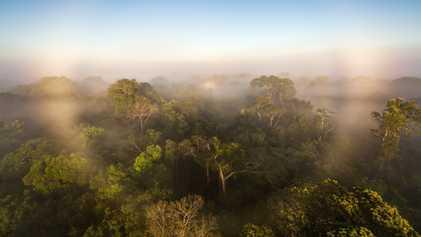 Estudo inédito sugere que a floresta amazónica danificada está a piorar as alterações climáticas