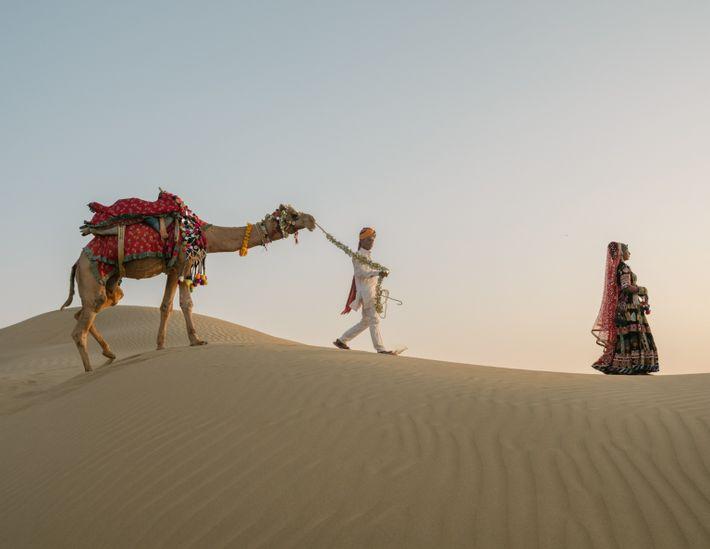 Camelo ao pôr-do-sol