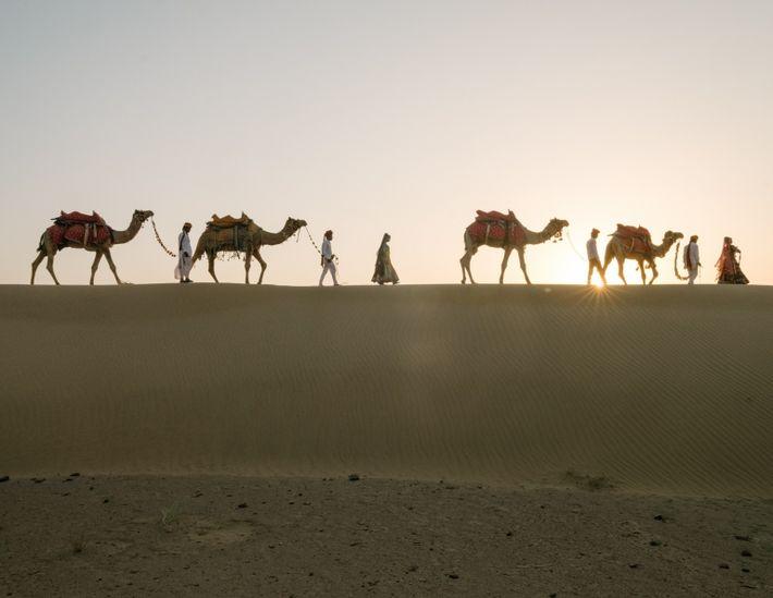 Passeio de camelos no pôr-do-sol