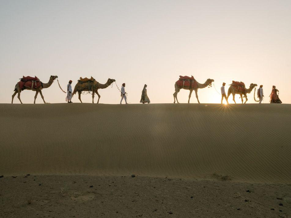 Estão a desaparecer camelos na Índia, ameaçando uma cultura nómada secular
