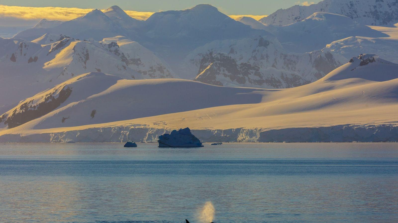 mito respirador baleias