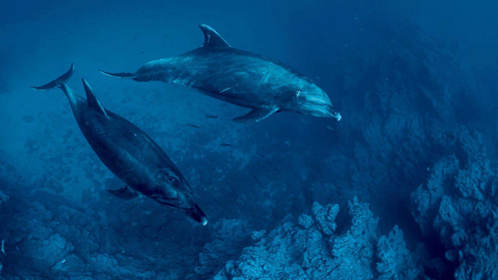 Golfinhos nariz-de-garrafa