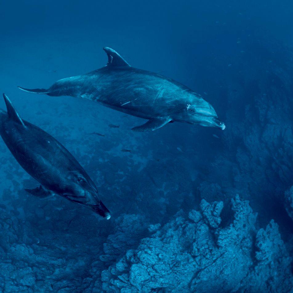 """""""Genes perdidos"""" são uma forma de evolução da espécie dos cetáceos"""