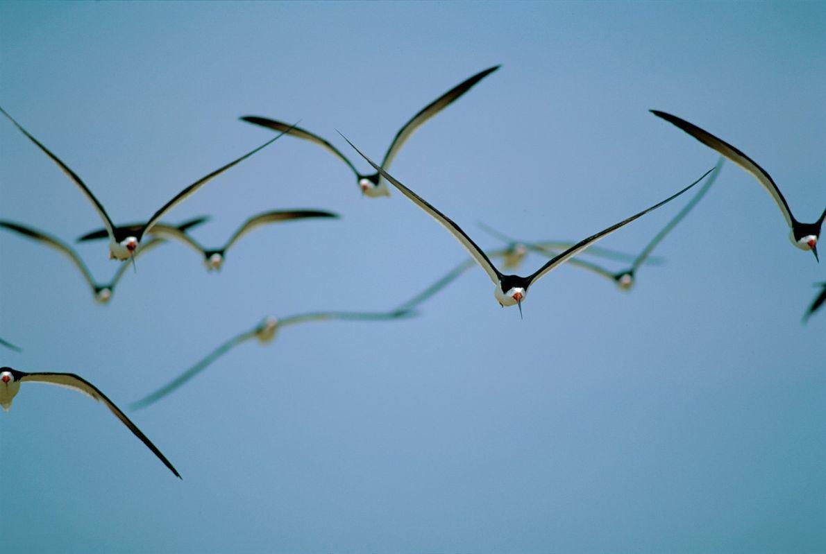 Espécies de Aves em Perigo em Portugal