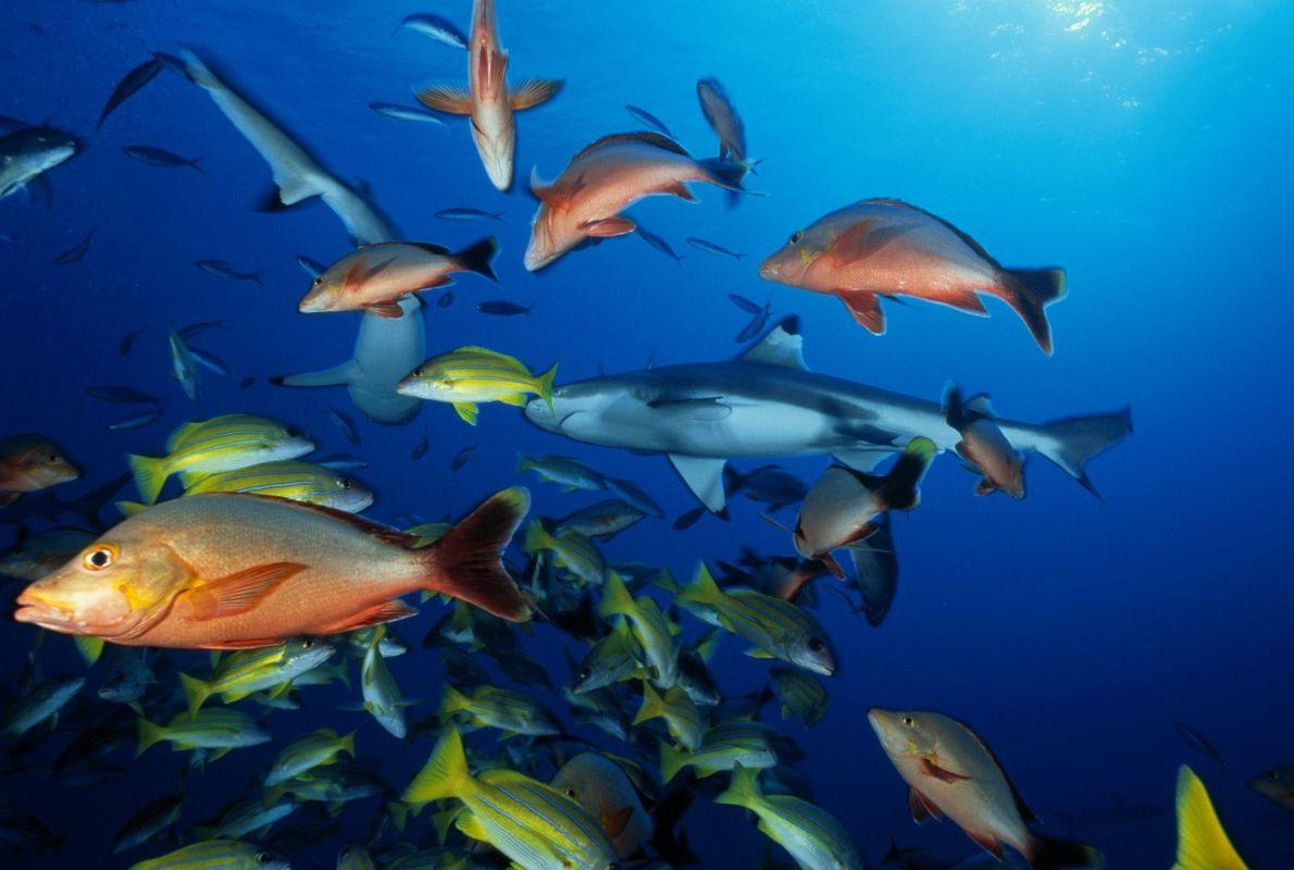 Alterações Climáticas: Relações Entre Peixes Já Não São o que Eram