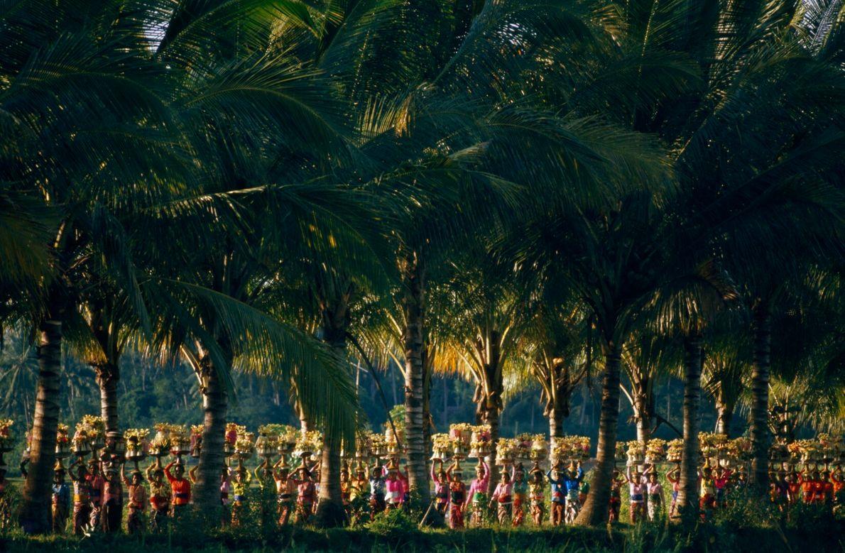 Desfile sob palmeiras