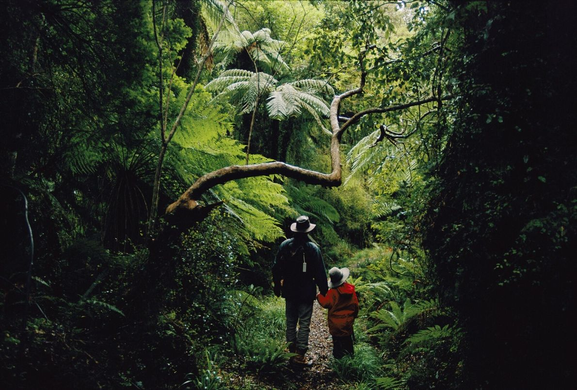 Trilho da floresta