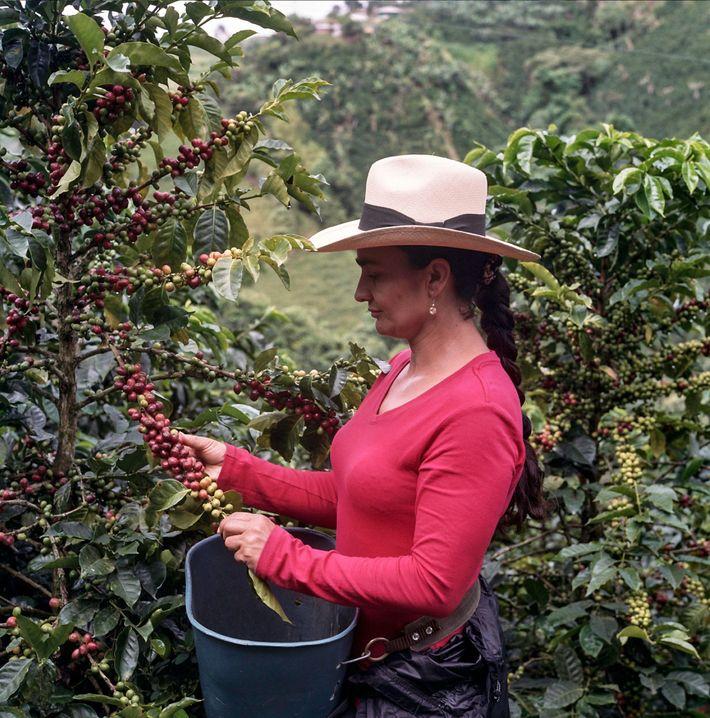 Um futuro melhor para os produtores de café