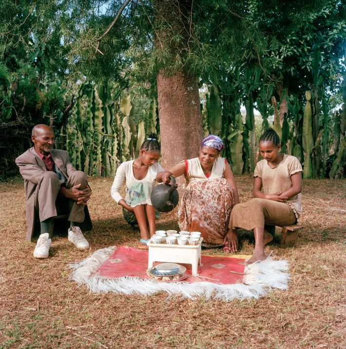 Bekele Erango, Birtugan e os filhos sentam-se para saborear o seu distinto café, um grão Arábica ...