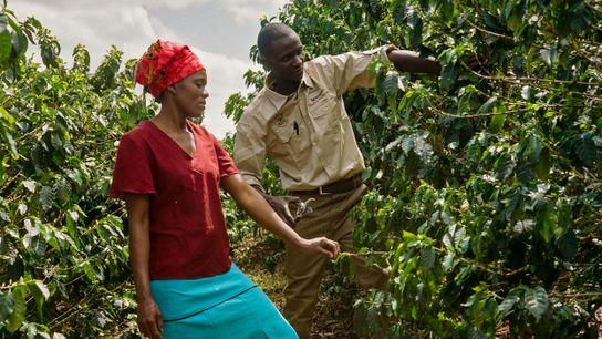 Os agrónomos da Nespresso fornecem aulas práticas no terreno, onde são feitas demonstrações e os participantes ...