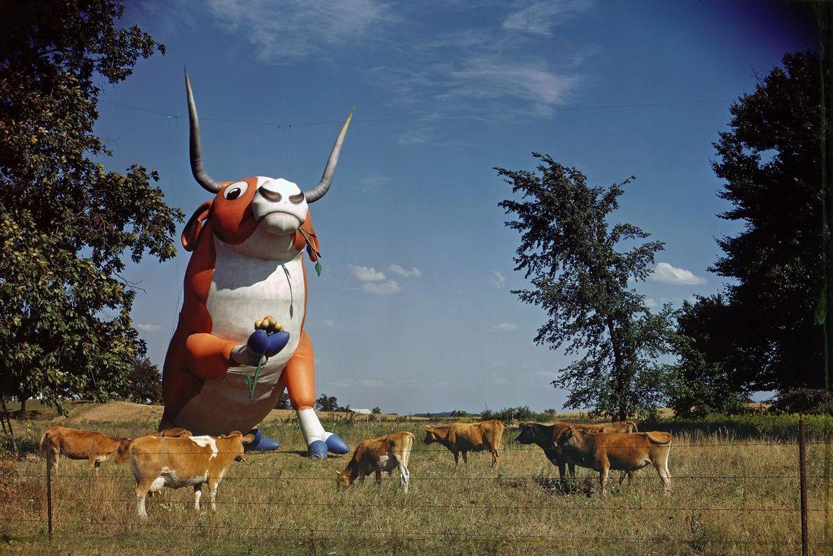 Esta vaca de borracha insuflável foi originalmente projetada para participar num desfile. Ao misturar borracha com ...