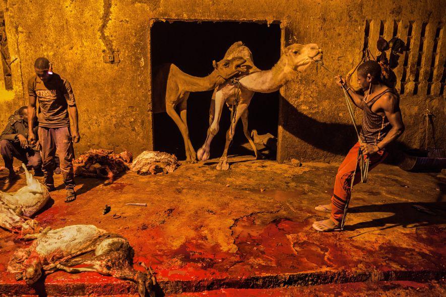 Os compradores escolhem os animais no mercado de gado e enviam-nos para este matadouro, em Agadez, ...