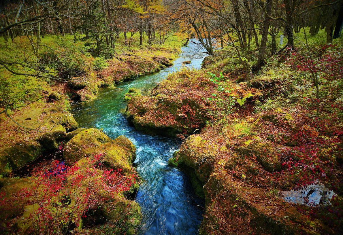 Em Nikko, no Japão, as margens cobertas de musgo e folhas vermelhas fazem fronteira com um ...