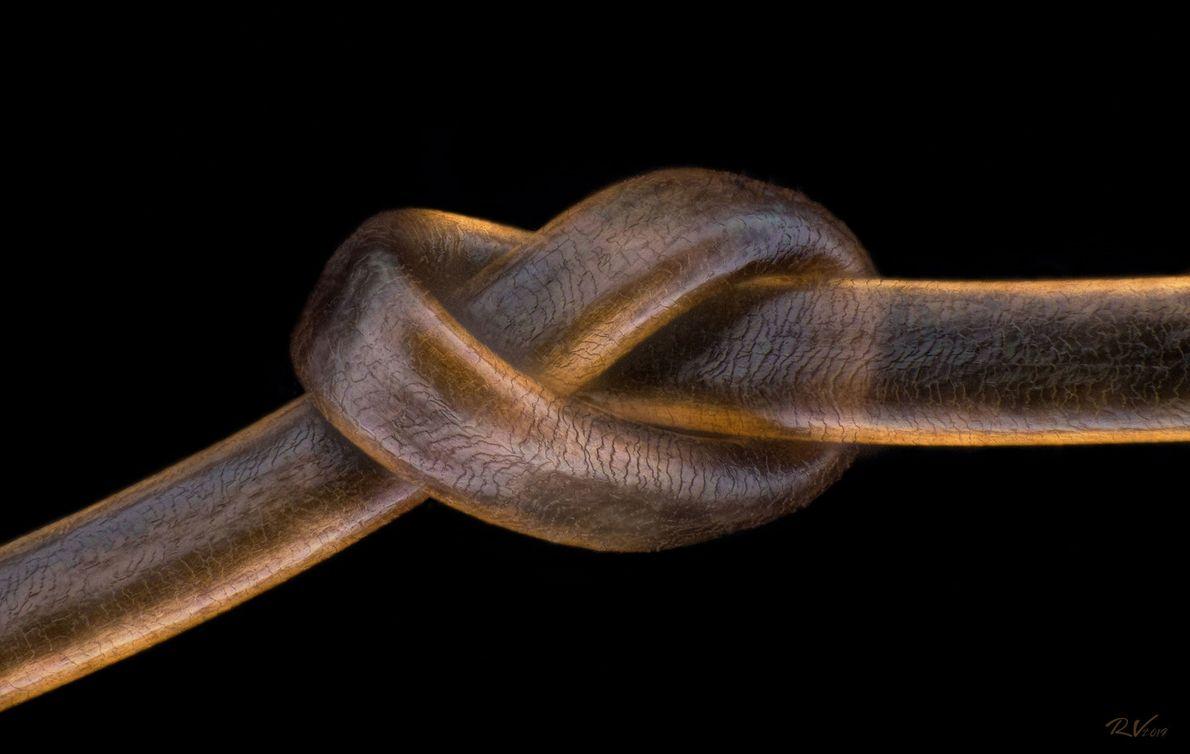 O fotógrafo austríaco Robert Viethaler sobrepôs imagens para retratar um fio de cabelo humano, atado com ...