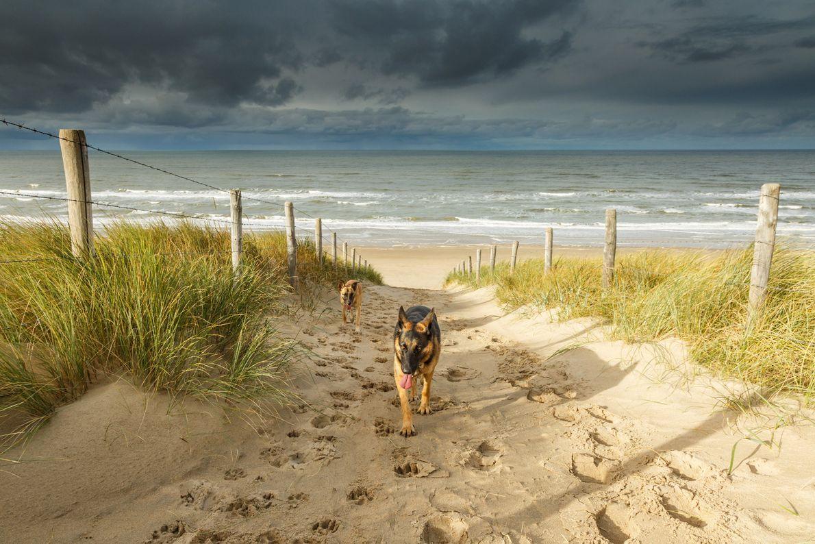 Praia de Noordwjk, Países Baixos.