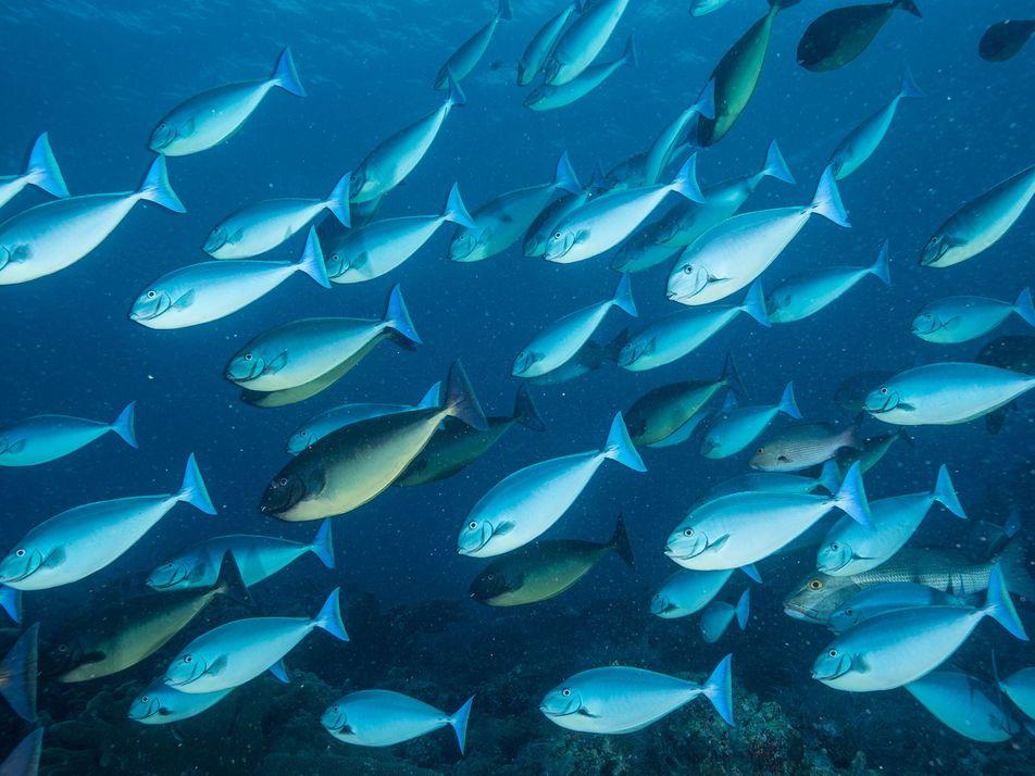 Alterações Climáticas Esgotam Pescarias Fundamentais