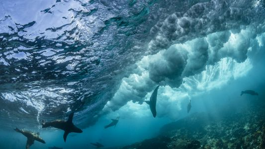 10 Curiosidades Sobre os Oceanos