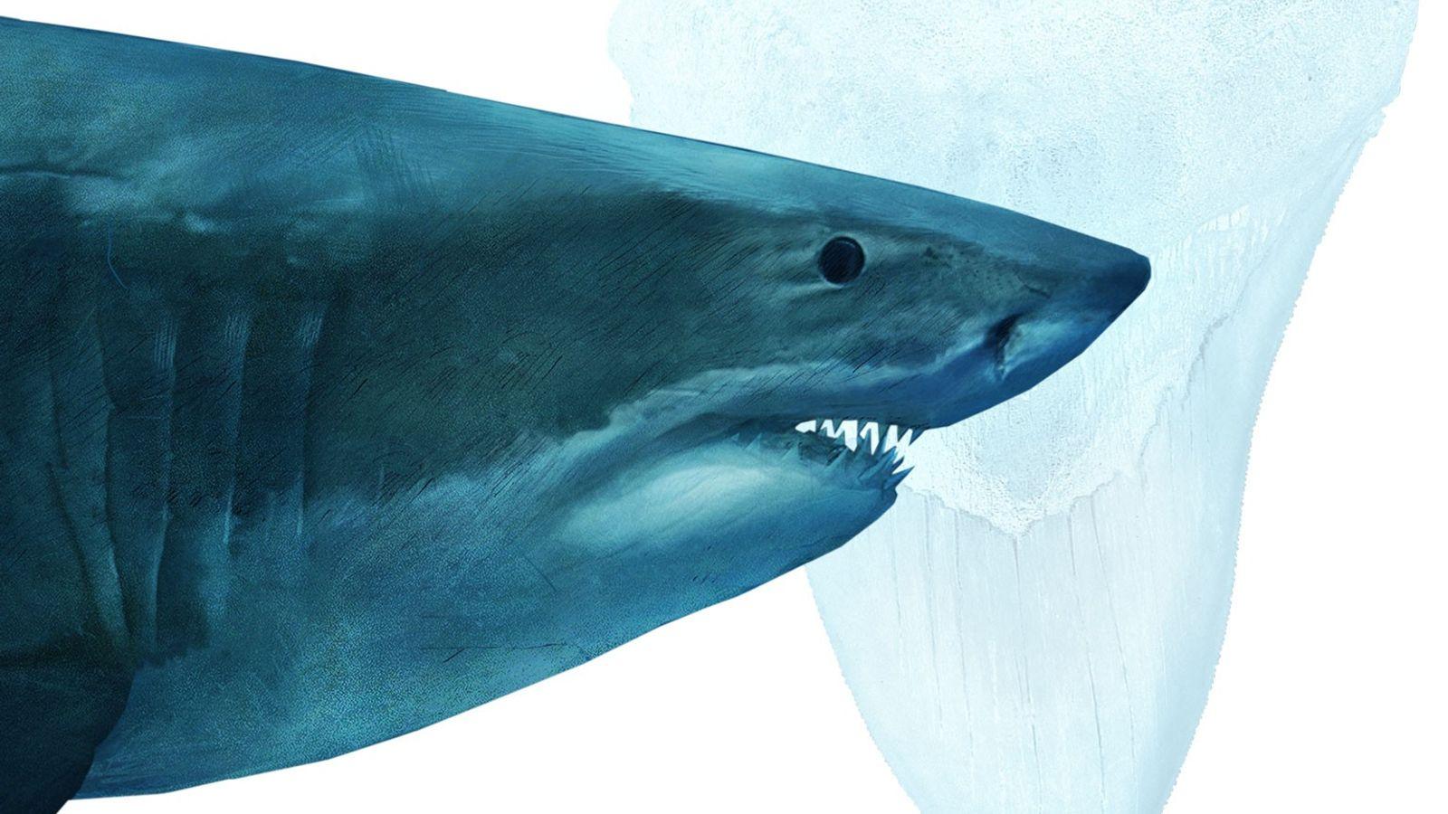 Megalodontes criaturas enormes que cresciam até aos 18 metros de comprimento e ostentavam mandíbulas com mais ...