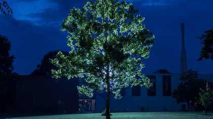 Árvores que Viajaram ao Espaço Vivem Agora na Terra. Saiba Onde Encontrá-las.