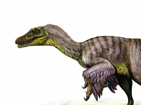 Os Velociraptores Estão Entre os Dinossauros Mais Incompreendidos. Descubra Porquê.