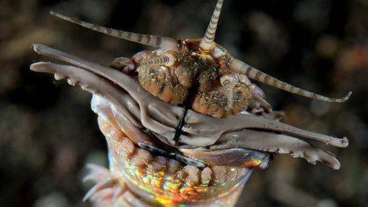 Vermes Gigantes Caçavam no Antigo Leito Marinho