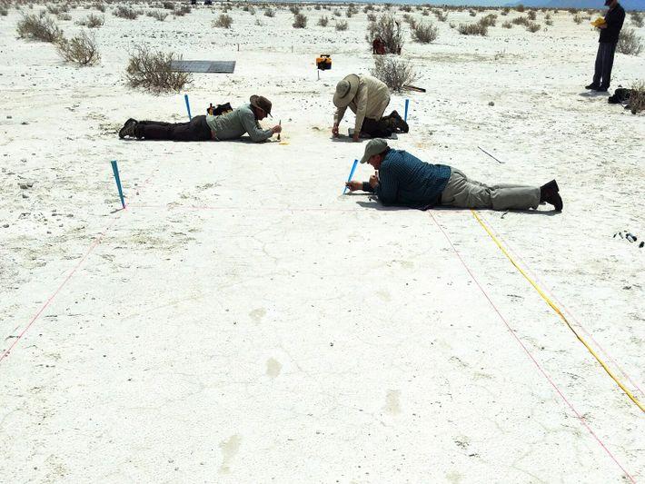 Cientistas escavam cuidadosamente as pegadas antigas pressionadas na areia antes de as registarem em 3D. As ...