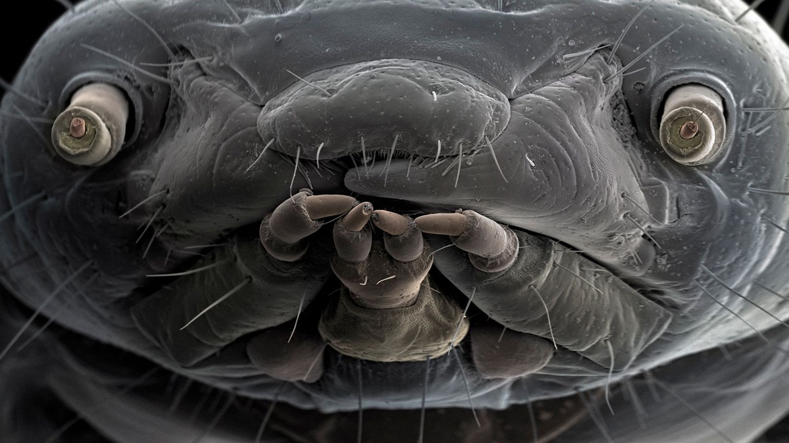larva-da-farinha