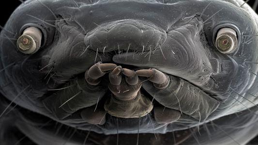 Imagens Extraordinárias Revelam Mundo Oculto da Vida Microscópica
