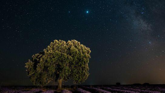 Júpiter e Saturno brilham numa noite limpa de julho sobre um campo de lavanda perto da ...