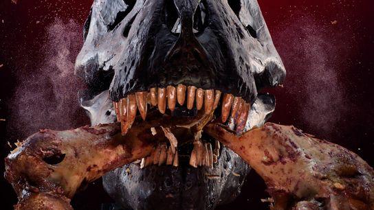 Um crânio mecânico de T. rex desfaz um osso, num estudo sobre a força da sua ...