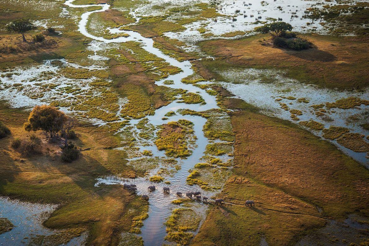Os complexos padrões de água e terra em transformação constante alimentam a abundante vida selvagem no ...