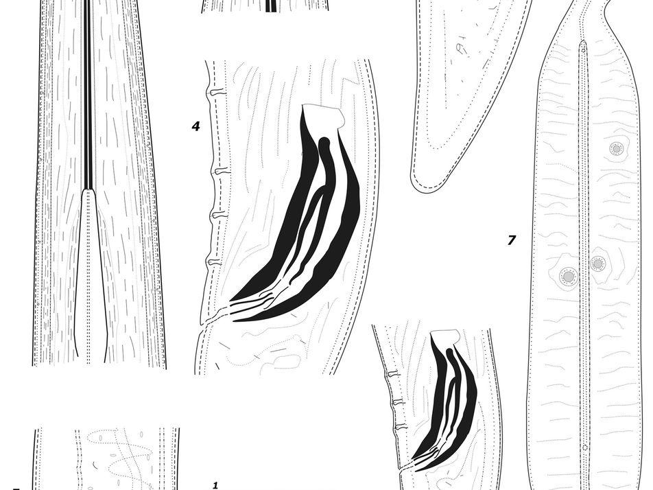 Nova Espécie de Nemátodes Descoberta por Universidade de Évora