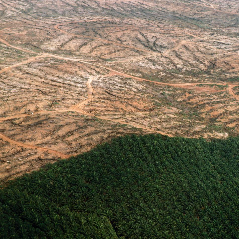 O que é a COP26 – e por que razão é tão importante?