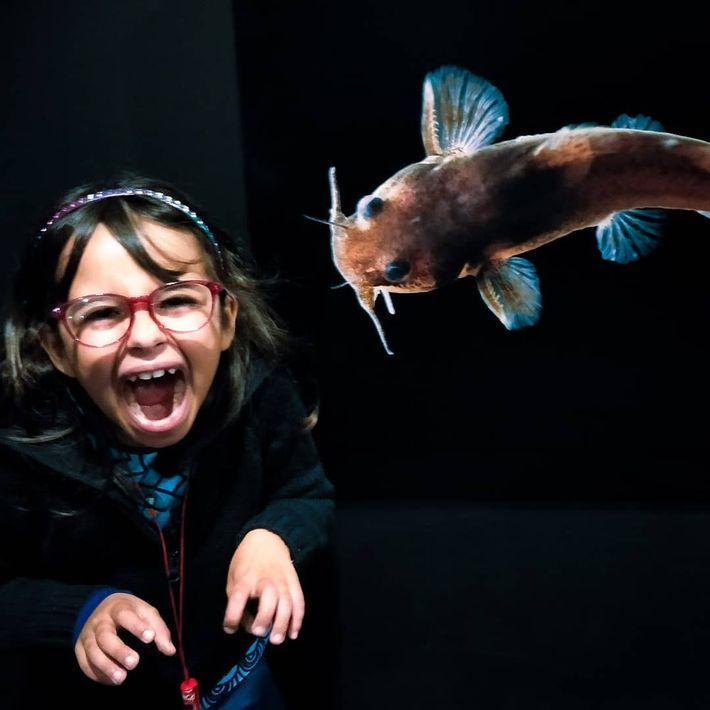 Imagem do vencedor @pedrosimp na exposição Photo Ark