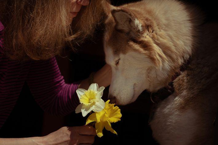 Um cão de terapia chamado Casey interage com Janice – cujo sobrenome não foi divulgado – ...