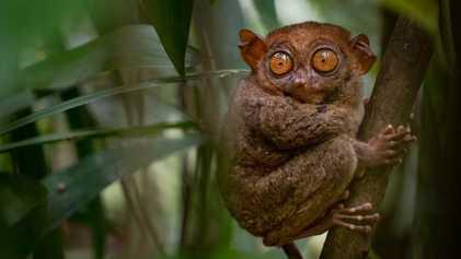 Este país é onde se encontram alguns dos animais mais raros do mundo