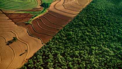 Novo Líder do Brasil Prometeu Explorar a Amazónia — Mas Será que Pode?