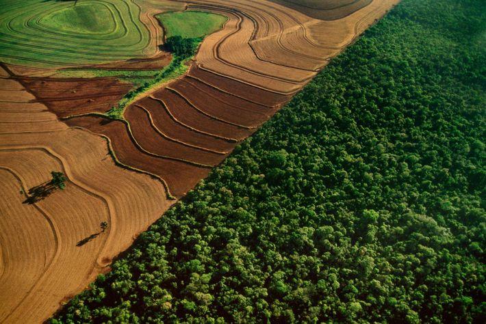 Terrenos cultivados orlam a floresta tropical no Parque Nacional do Iguaçu, no Brasil. Os conservacionistas temem ...