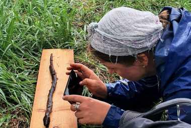 Tirando uma fotografia à cobra