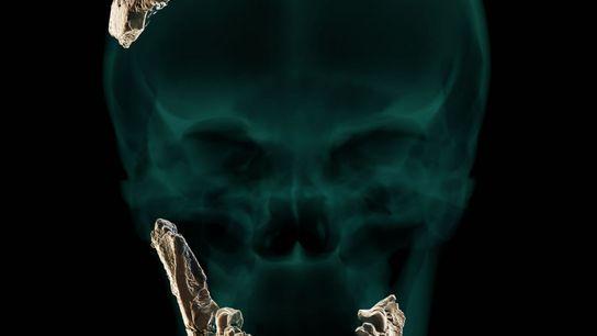 Os investigadores usaram os restos do crânio encontrado em Nesher Ramla para criar uma reconstrução virtual de ...