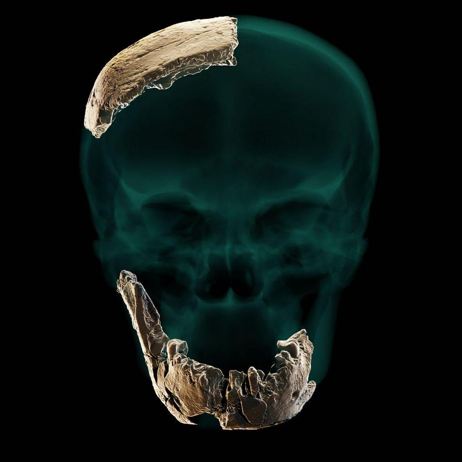 Descoberta de crânio intrigante pode apontar para um antepassado humano desconhecido