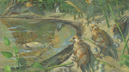 Inédito: Ave Fóssil Encontrada Com Um Ovo Dentro de Si