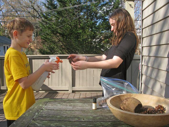 Os irmãos Leo e Lily Levine borrifam pinhas para ficarem com aroma a canela.