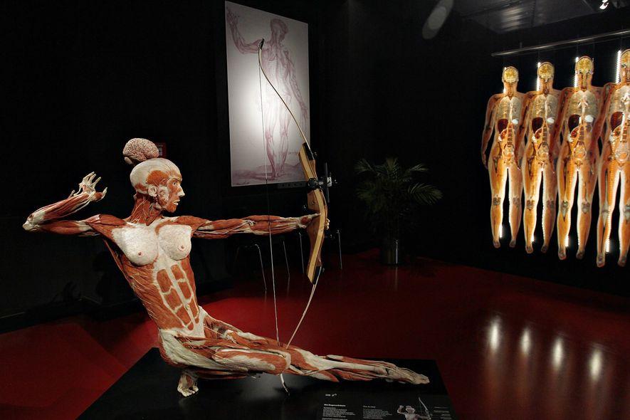 O Instituto de plastinação Gunther Von Hagens exibe corpos preservados em posições criativas – como este ...