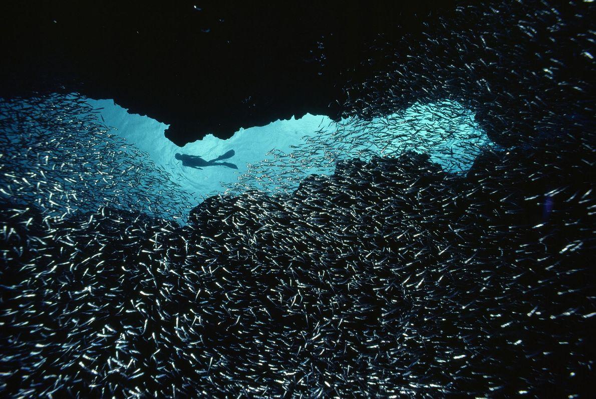 Entre os Peixes